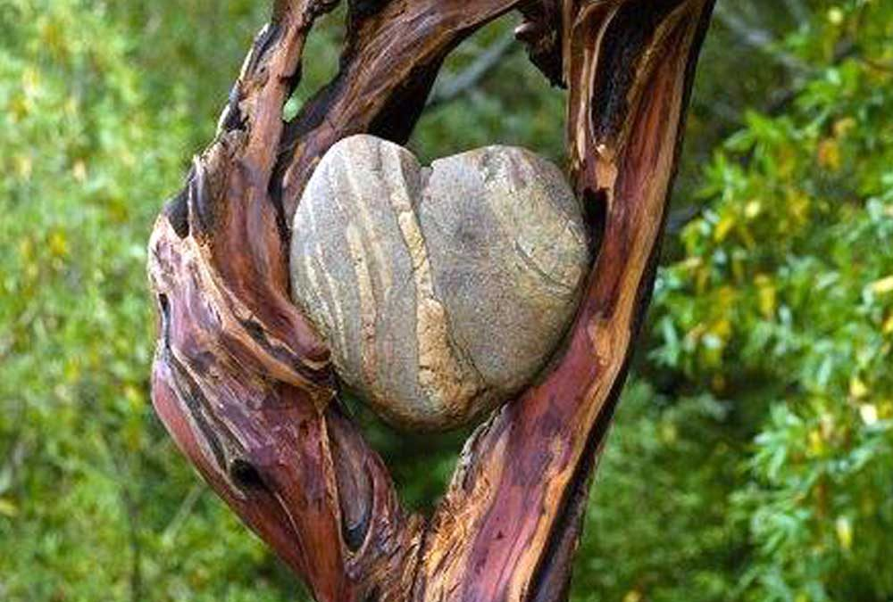 Heart of Nature, Heart of Passion